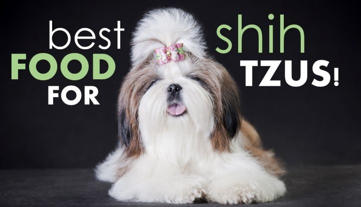 Top 5 Best Dog Foods For Shih Tzus Shih Tzu Puppy Care