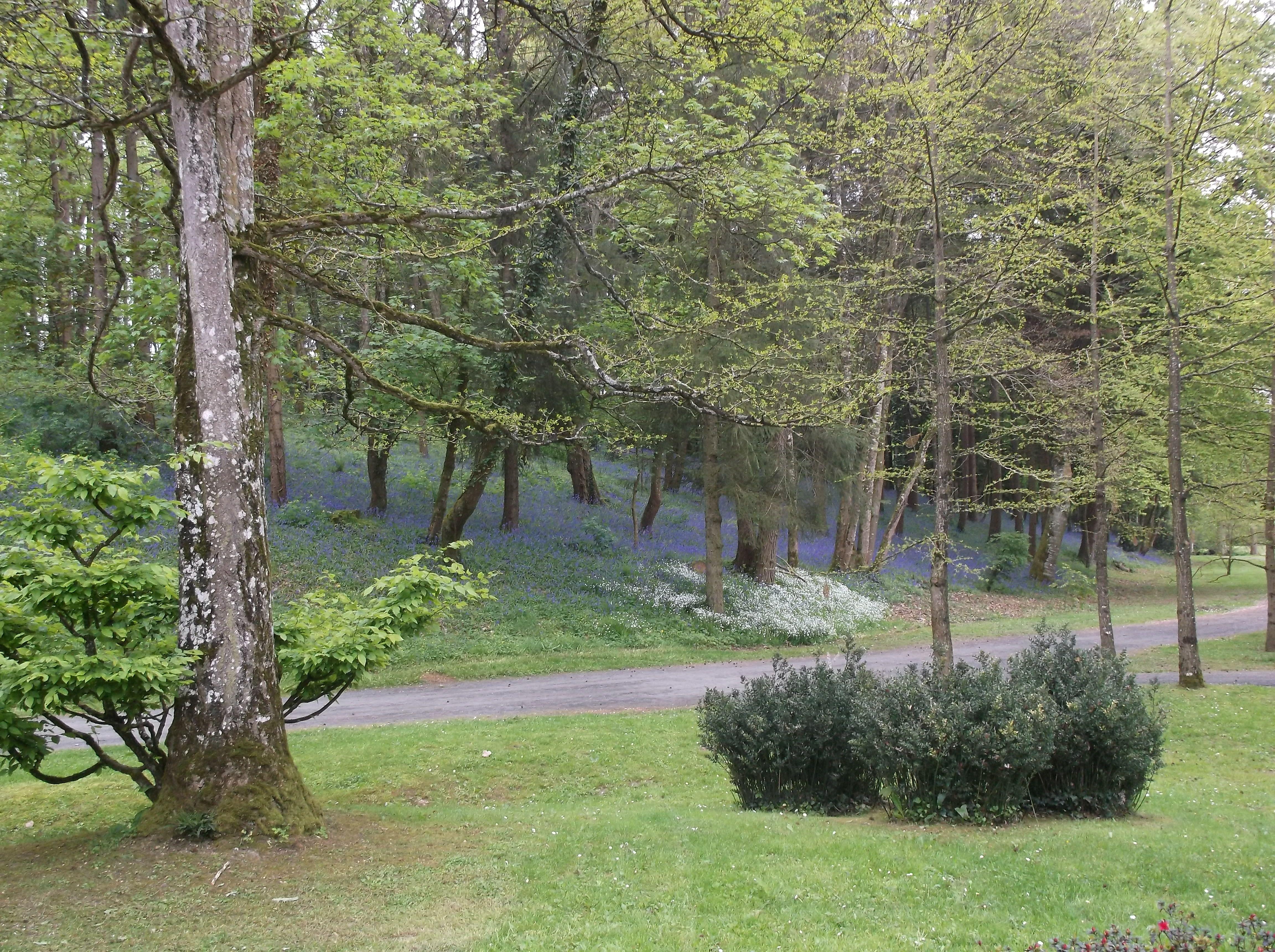 colline couverte de jacinthes sauvages - Parc oriental de Maulévrier