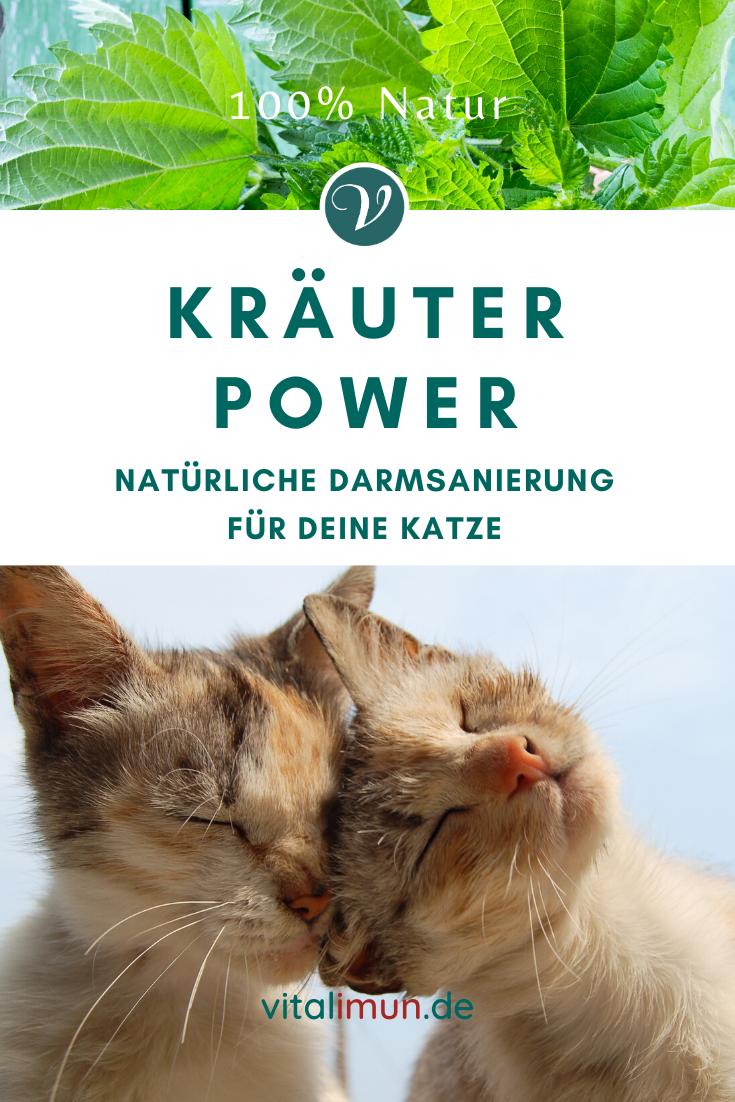 Vitacat Intensiv Naturliches Erganzungsfutter Fur Ihre Katze In 2020 Katzen Tierheilpraktiker Heilpflanzen