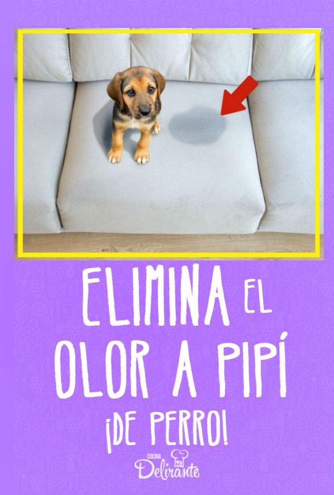 Elimina El Olor A Pipí De Perro Con Esta Mezcla Casera Orina De Perro Repelente Para Perros Eliminar Olor A Perro