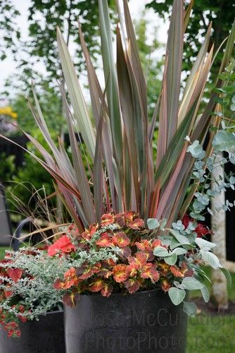 Container Gardening Magazine, 2012 Edition   Contemporary   Landscape    Vancouver   Pot Incorporated