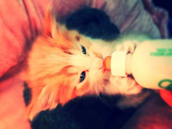 JC's kitten Vega! So adorable! This is my edit plz give credit to: jacexx