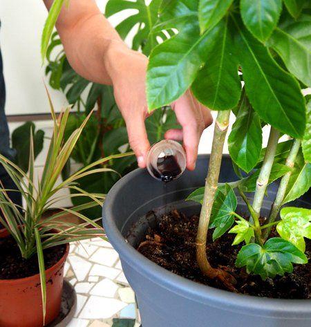 Abonar las plantas en maceta permite paliar la falta de tierra y el