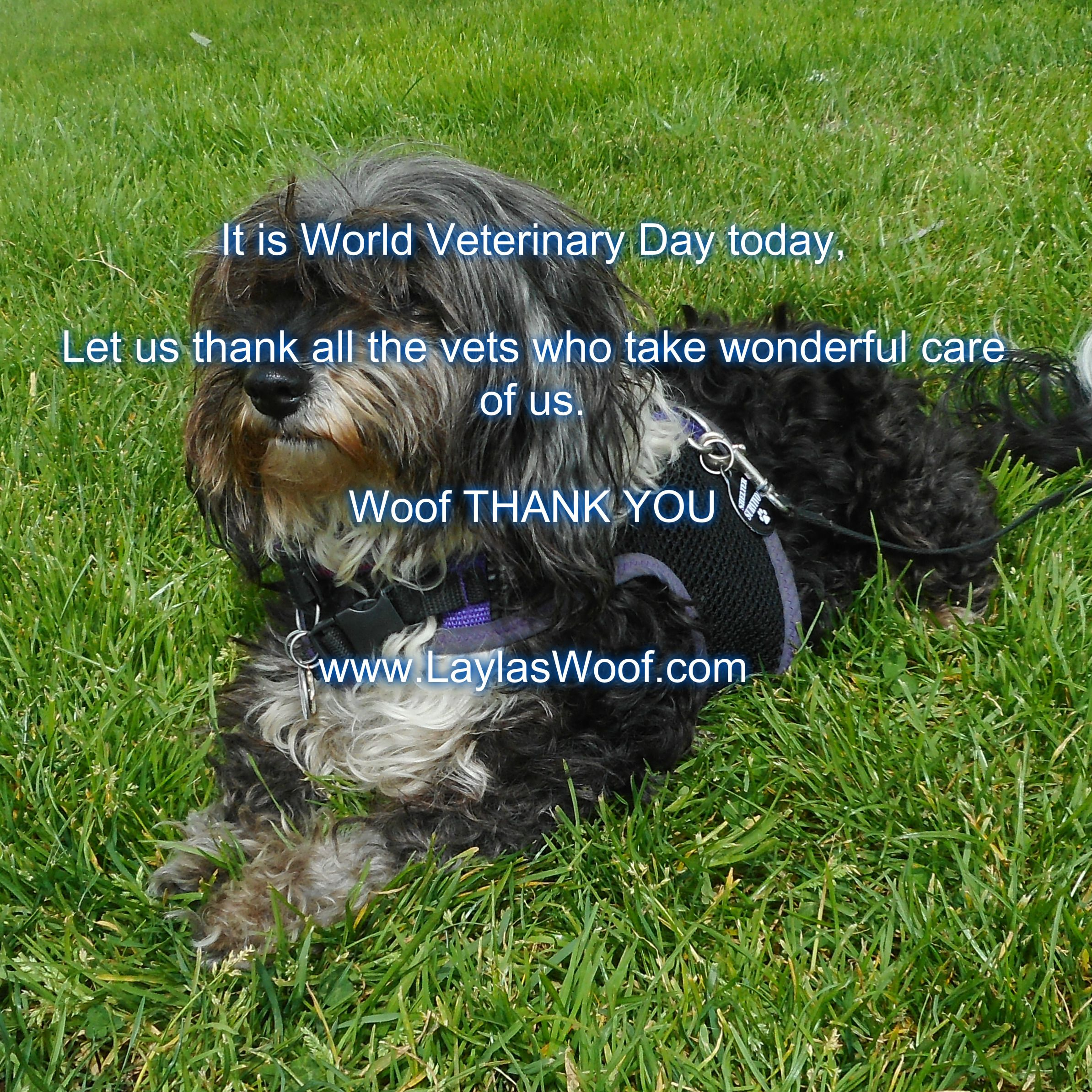 World Veterinary Day Veterinary Day Dogs Rescue Dogs