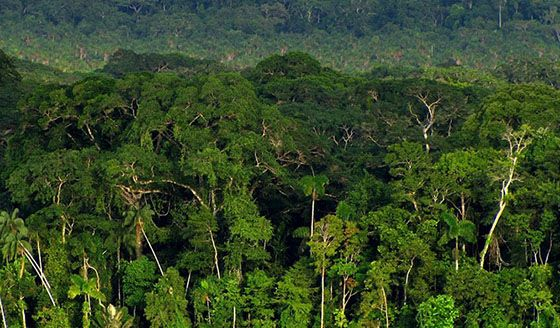 Canopy in the Amazon Rainforest & Canopy in the Amazon Rainforest | Amazon the Beautiful | Pinterest ...
