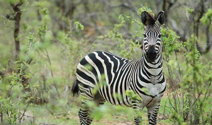 Se da a conocer la actualización de la Lista Roja de especies en peligro de la UICN: http://www.guiarte.com/noticias/lista-roja-uicn-2016.html
