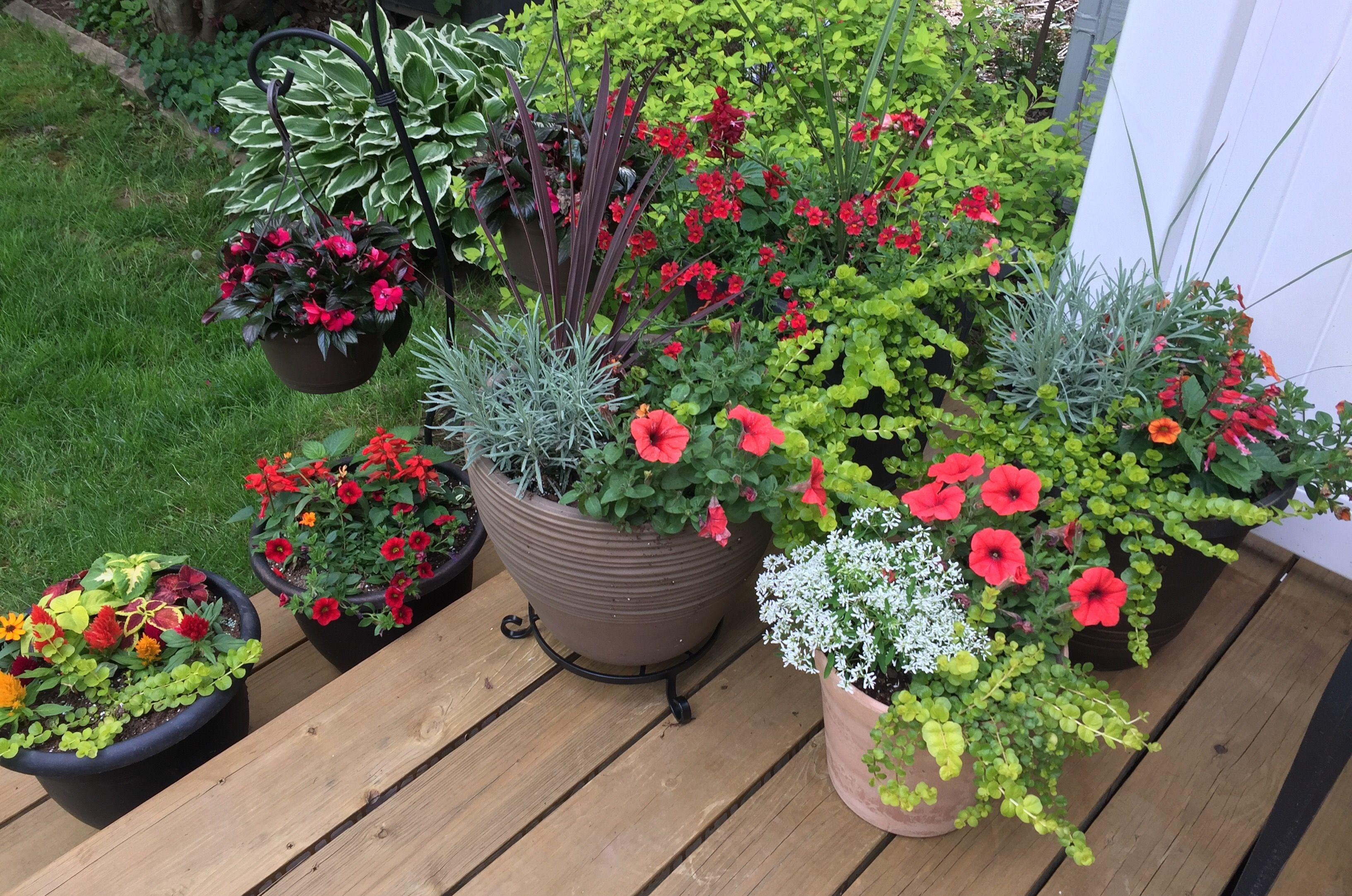 My container garden 5/9/17 Container gardening, World