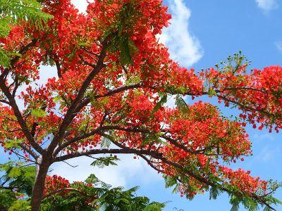 Bwana joen kynästä: Luonnon kauneus puhuu luomisesta