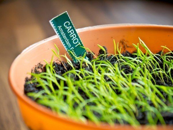 Pin On Indoor Gardening 400 x 300