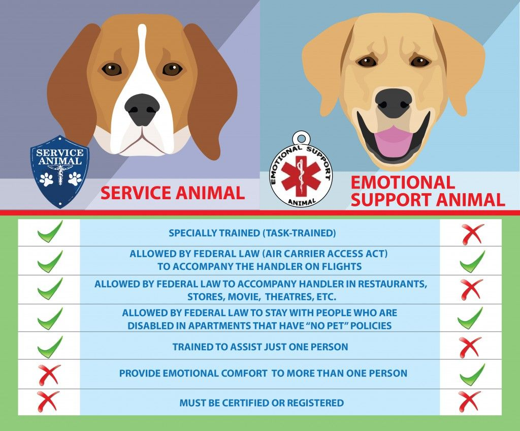 Are Service Dogs Emotional Support Animals Different