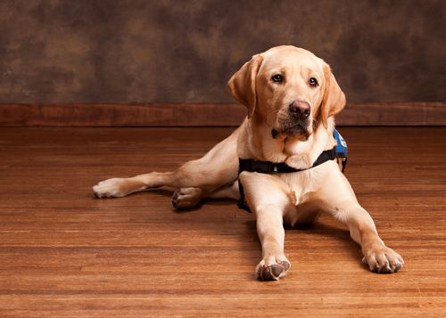 Is Bamboo Flooring Good For Dogs With Images Best Floors For