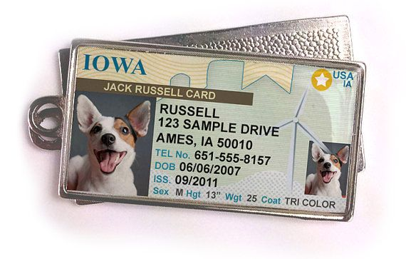 Every Doggie Needs A License Drivers License That Is Iowa Drivers