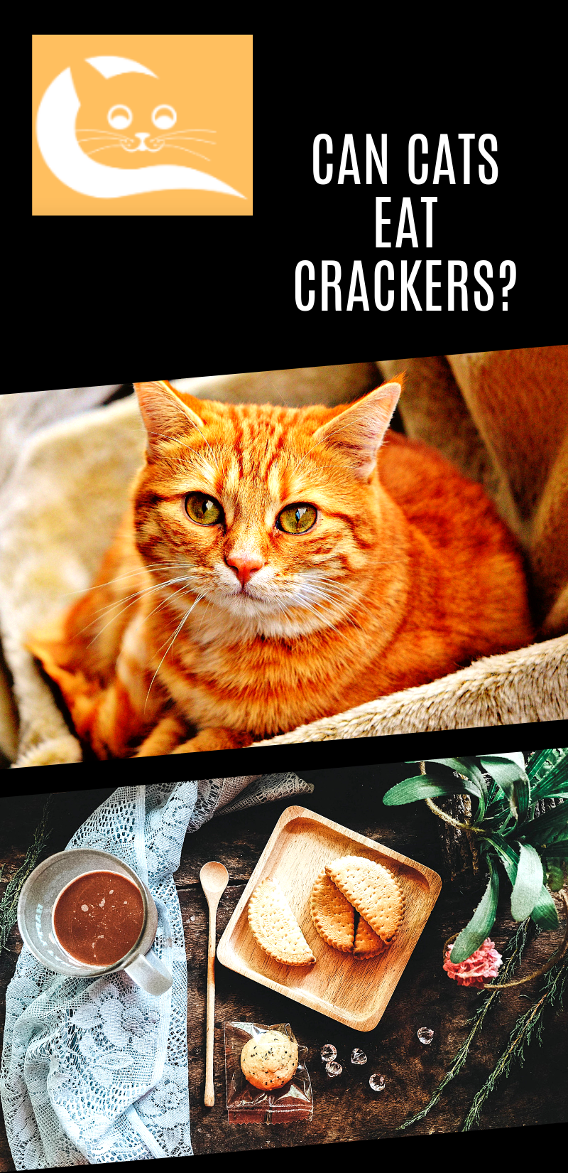 Can Cats Eat Crackers Best cat food, Wellness cat food