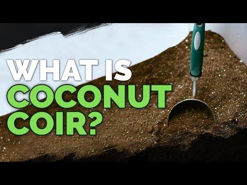 f1c8e79aa0d75739bf6149e20a0218a8 - How To Use Coconut Coir In Gardening