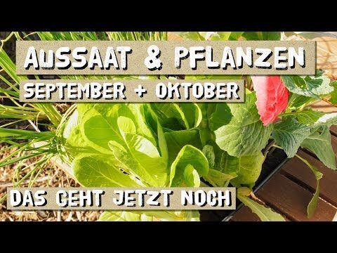 Aussaat im September und Oktober Säen und pflanzen im