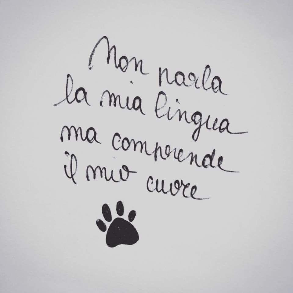 Frasi Sui Cani Da Tatuare.Non Parla La Mia Lingua Ma Comprende Il Mio Cuore Modi Di Dire Italiani Citazioni Casuali Citazioni Sagge