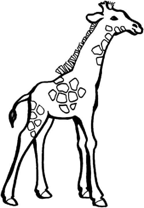 30 Desenhos De Girafa Para Pintar Colorir E Imprimir Desenho
