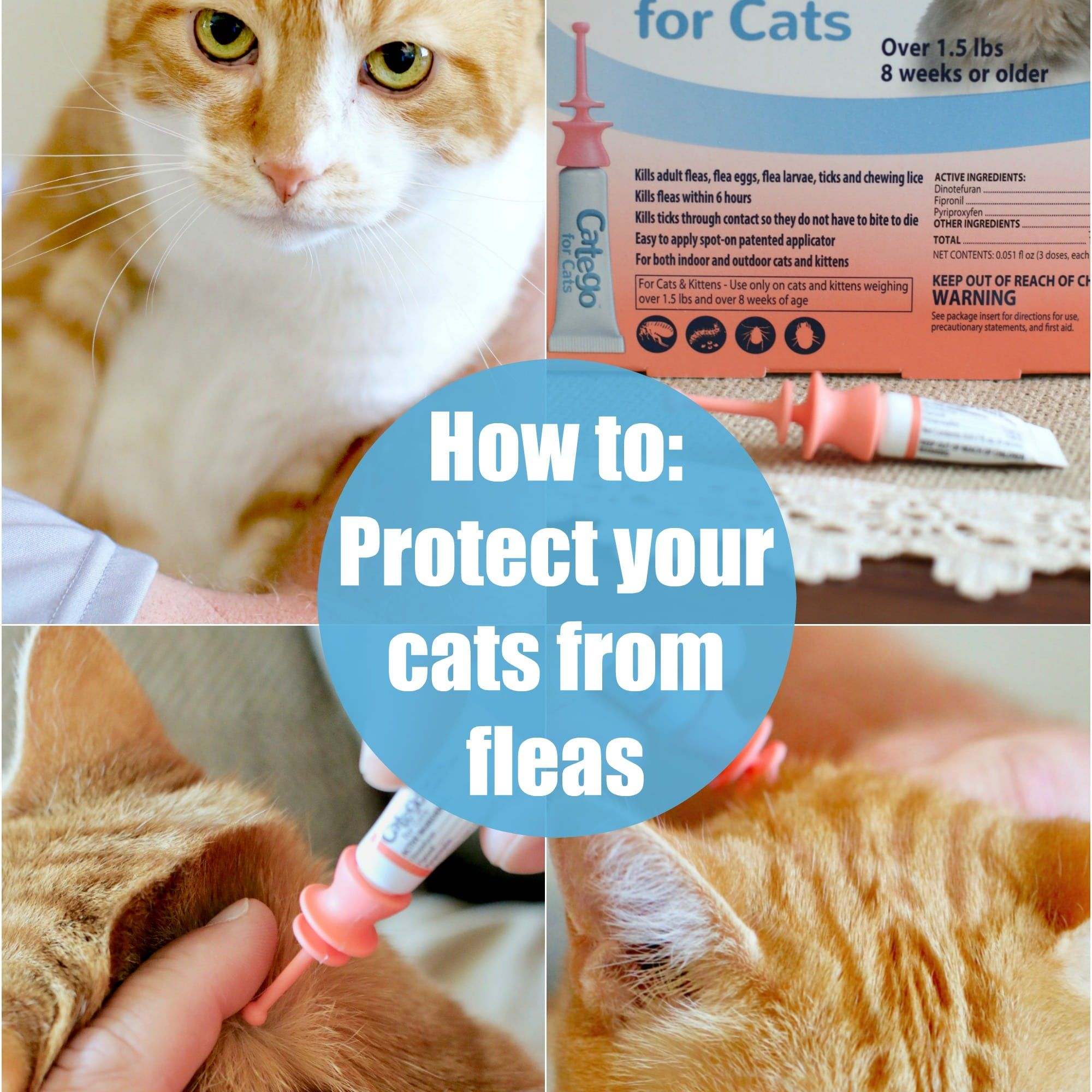How To Protect Your Cat From Fleas Cats Cat Fleas Fleas