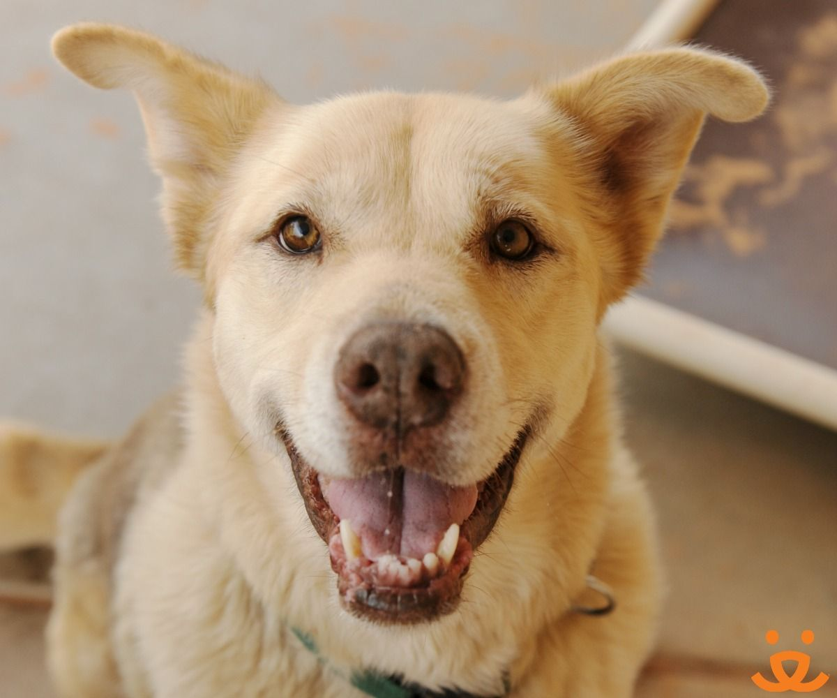 Adopt From Our Sanctuary Animal Society Animals Pets