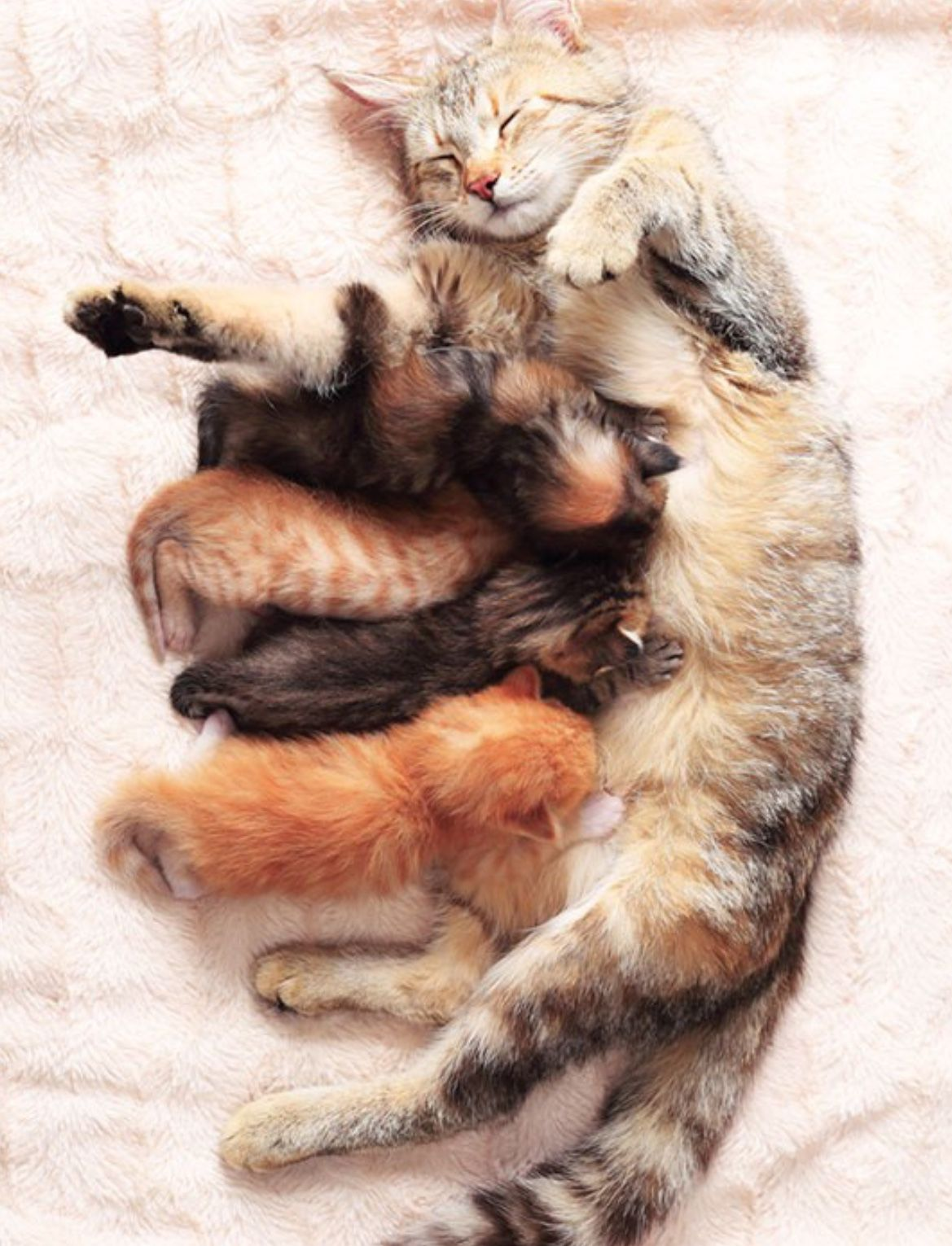 Cat Mom With Beatyful Babys Cute Cats Cats Mama Cat