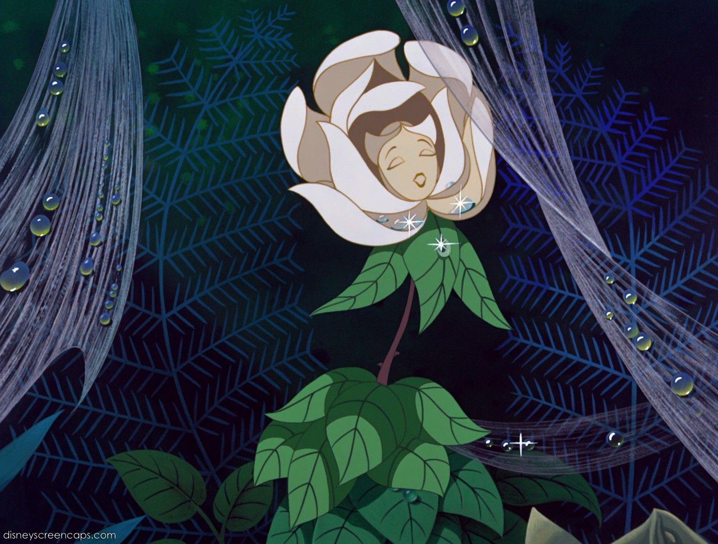 Alice in wonderland, garden of talking flowers, white rose