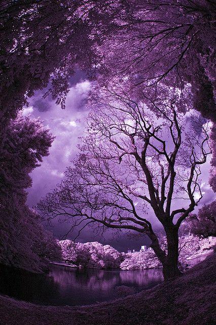 Rikugien Park in Purple
