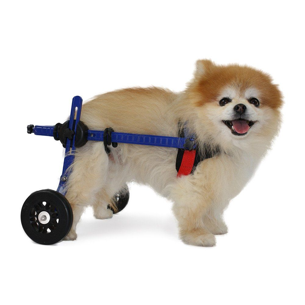 Dog Wheelchair Xs For Mini Toy Breeds 2 10 Pounds Veterinarian Approved Dog Wheelchair For Back Legs Dog Wheelchair Dog Toys Dogs