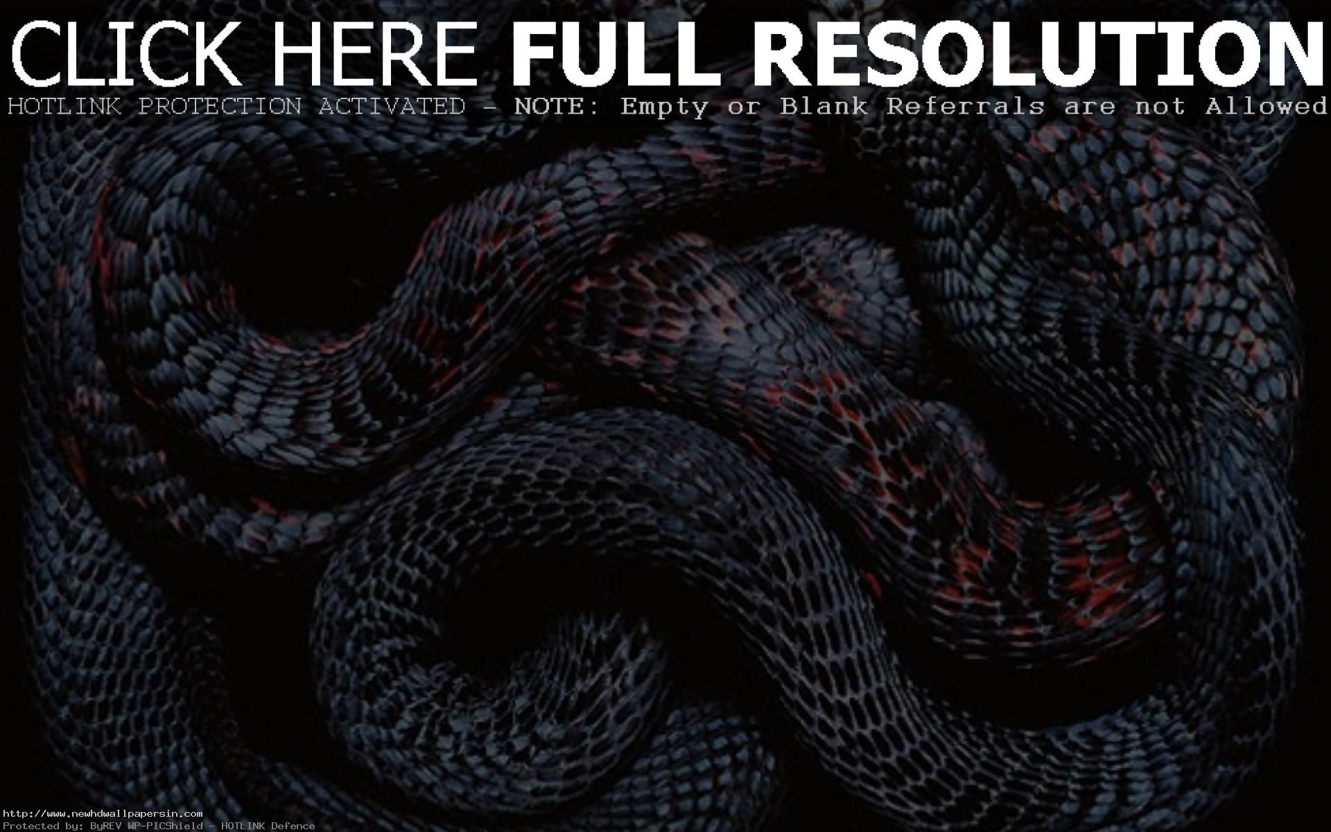 Snakes Wallpapers Wallpaper 1920x1080 Snake Images 42