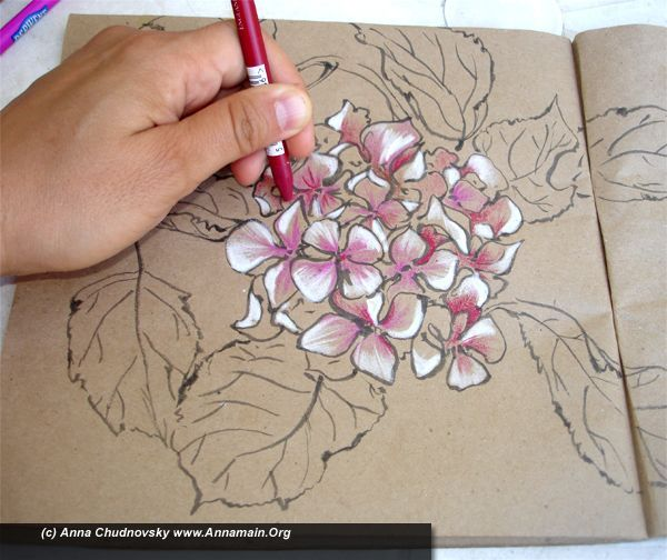 How To Draw Hydrangea Flowers Part I Flower Drawing Tutorials Flower Drawing Hydrangea Painting