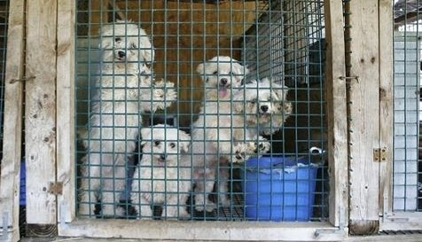 Ban the Retail Sale of Dogs, Cats & Rabbits