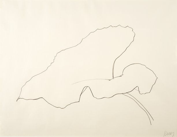 Contour Line Drawing Picasso : Ellsworth kelly s drawings display the same simplicity of line