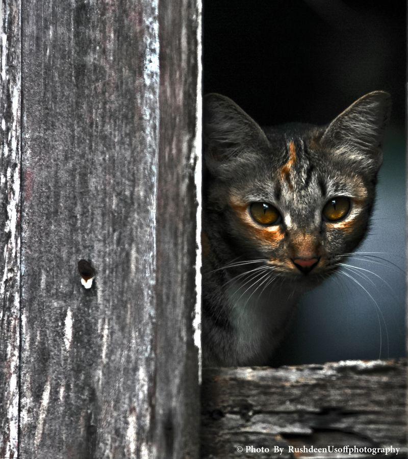 cat by Rushdeen Usoff, via 500px