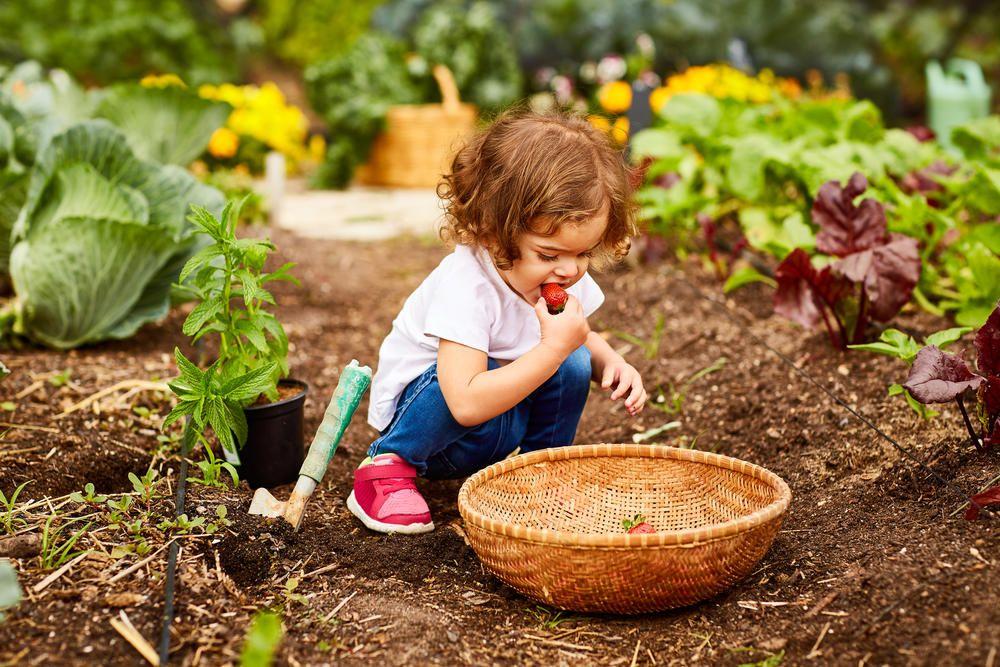Gemüse für Anfänger: Diese fünf Arten gelingen immer   Gemüse anbauen, Zierpflanzen, Herbst gemüse