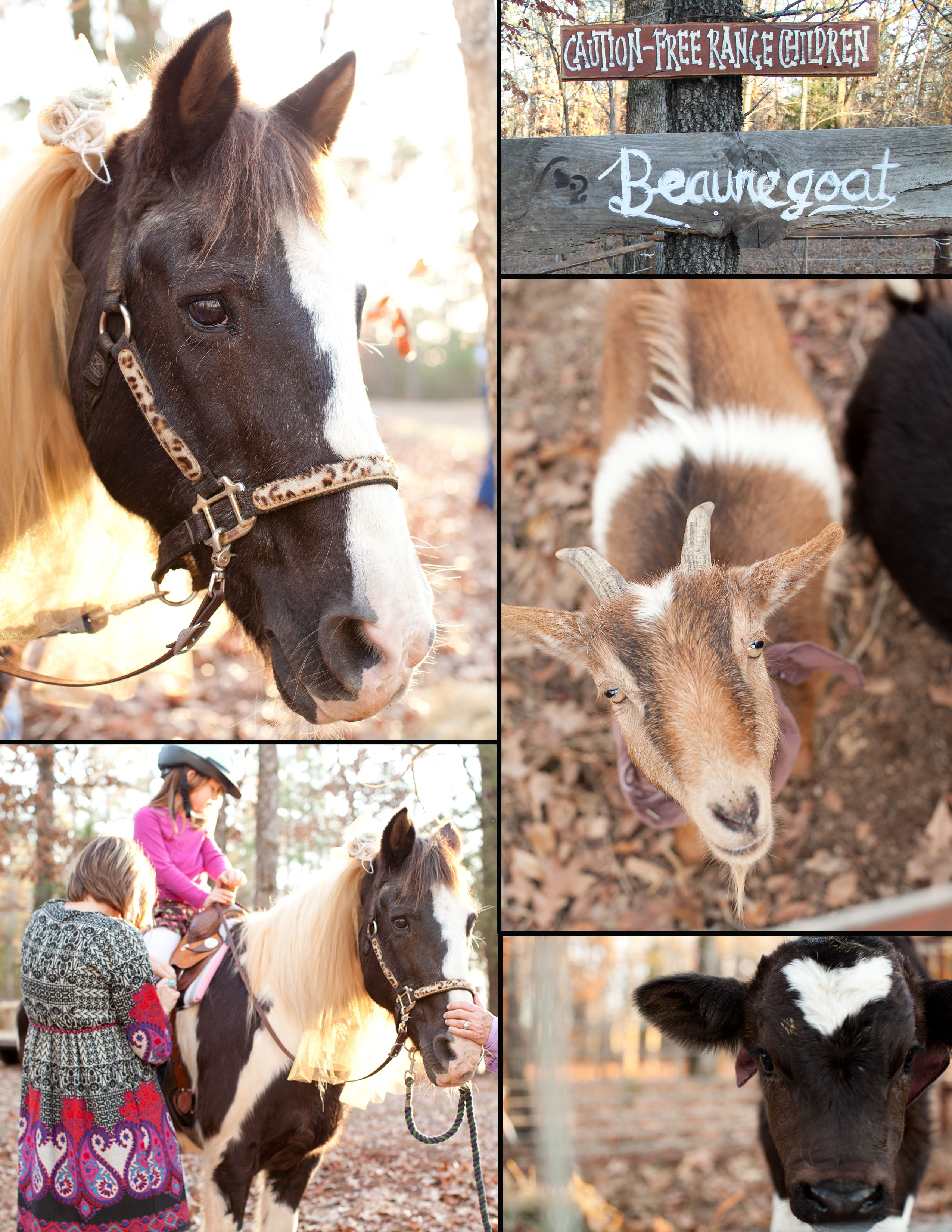 "Pony rides and petting zoo--the horses had ""bridle flowers"" made from burlap!"