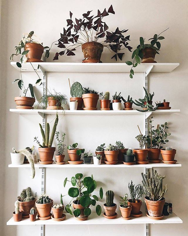 Room With Plants, Bedroom Plants, Plant Shelves