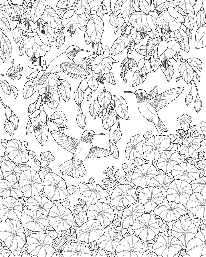 Bird Painting - Hummingbirds And Flowers Coloring Page by Crista ...