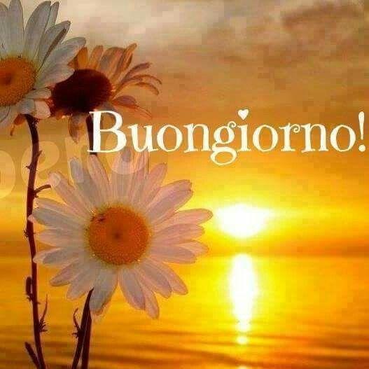 il Buongiorno tenero e dolce ~ Il Magico Mondo dei Sogni ...