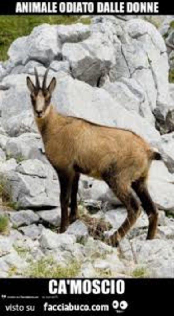 Meme Italiano Animali Divertenti Che Fanno Ridere