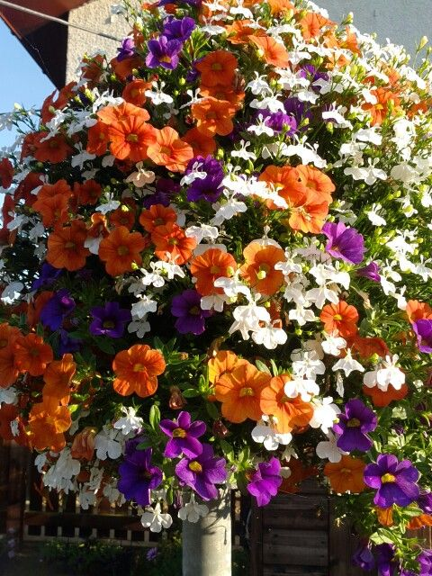 Trixi Spring Valley Flowers Pinterest Flowers Plants And