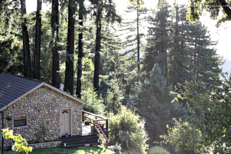 Dogfriendly festivals in california santa cruz redwood
