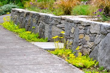 YELLOW-green, Sedum 'Angelina' I think... excellent in front of stone wall.  Will fill in over time.