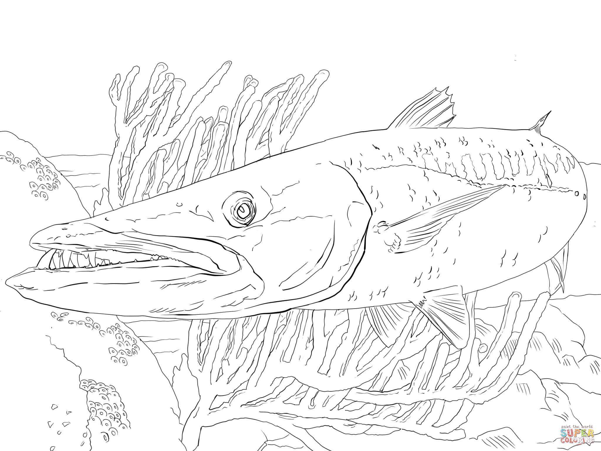 Barracuda Fish Fish Art Fish Drawings Fish Coloring Page
