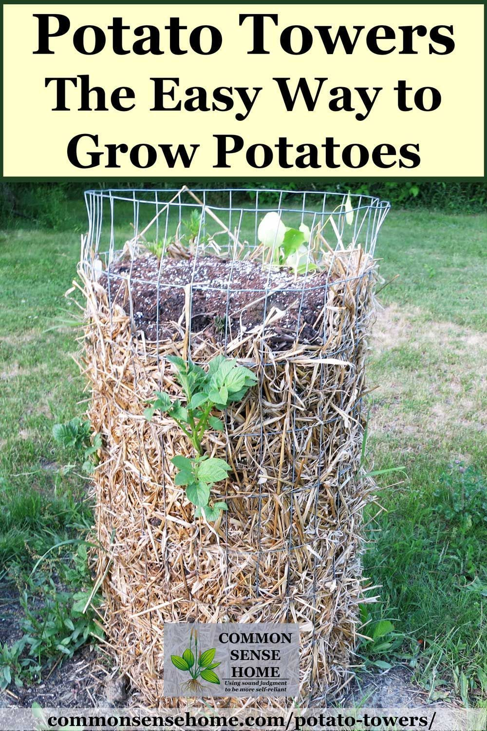 Potato Towers  Which Varieties to Grow and Tips for Success is part of Potato tower, Growing potatoes, Home vegetable garden, Food garden, Edible garden, Veg garden - How to grow potatoes using potato towers as an easy raised bed  Step by step instructions and pictures to take you from planting to harvest