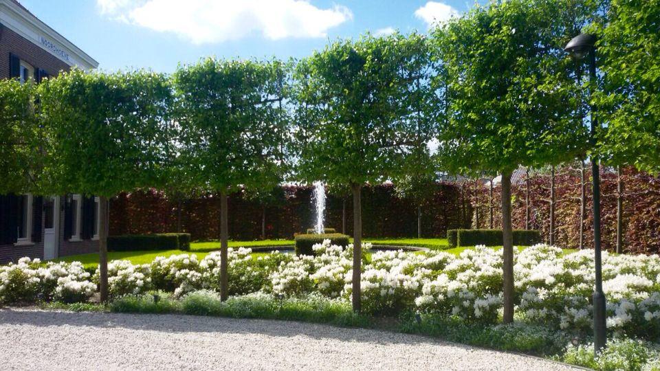 Villa tuin in bloei stam hoveniers pinterest tuin