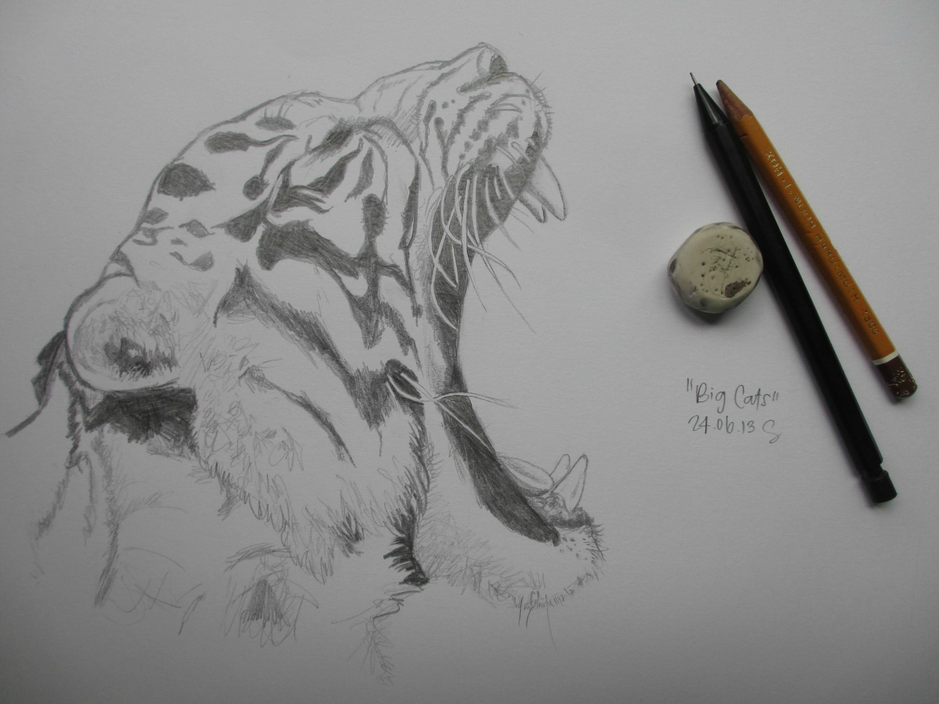 Line Drawing Of A Tiger S Face : How to draw a realistic tiger google search art time
