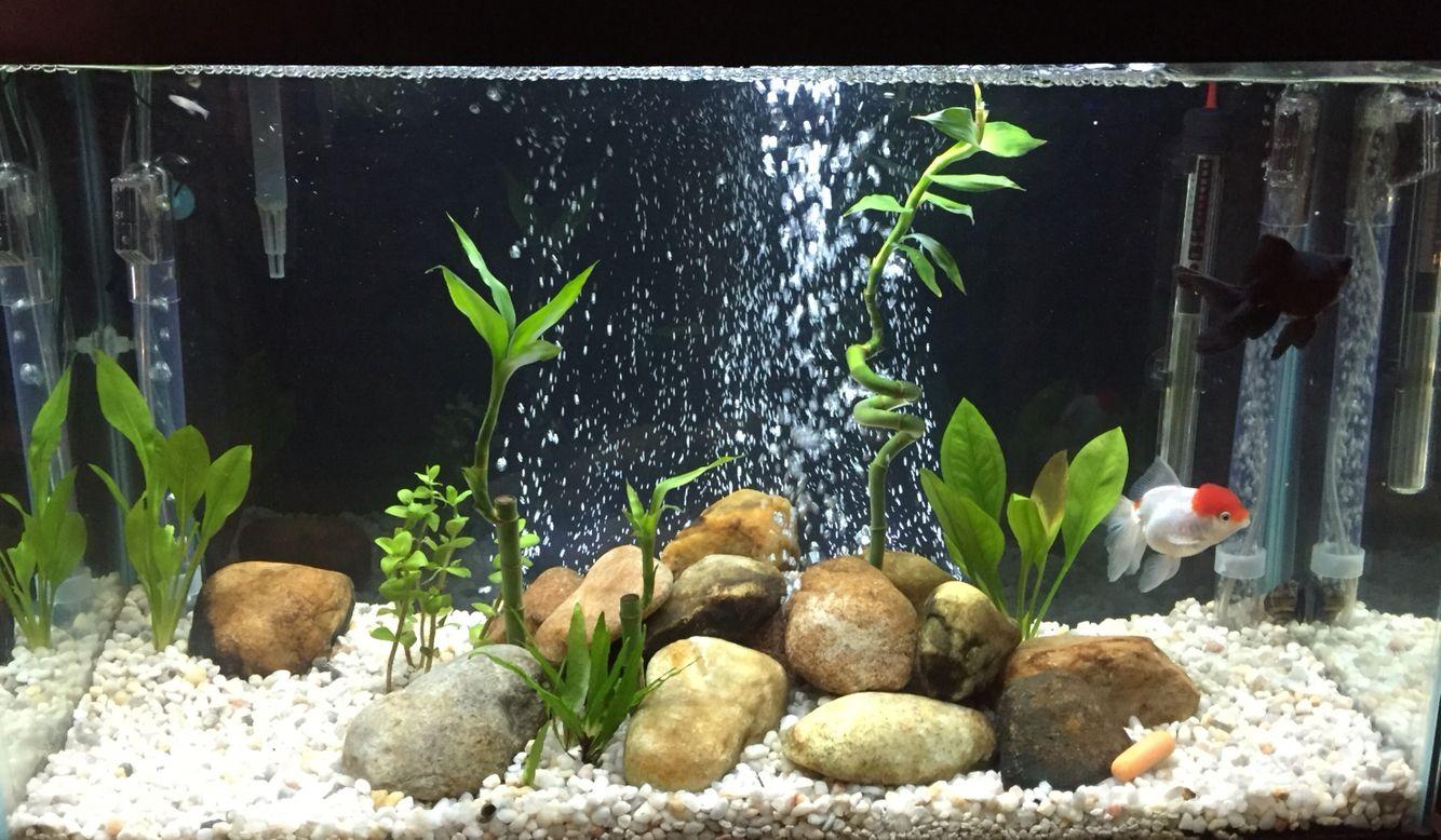 Pin On Freshwater Aquariums