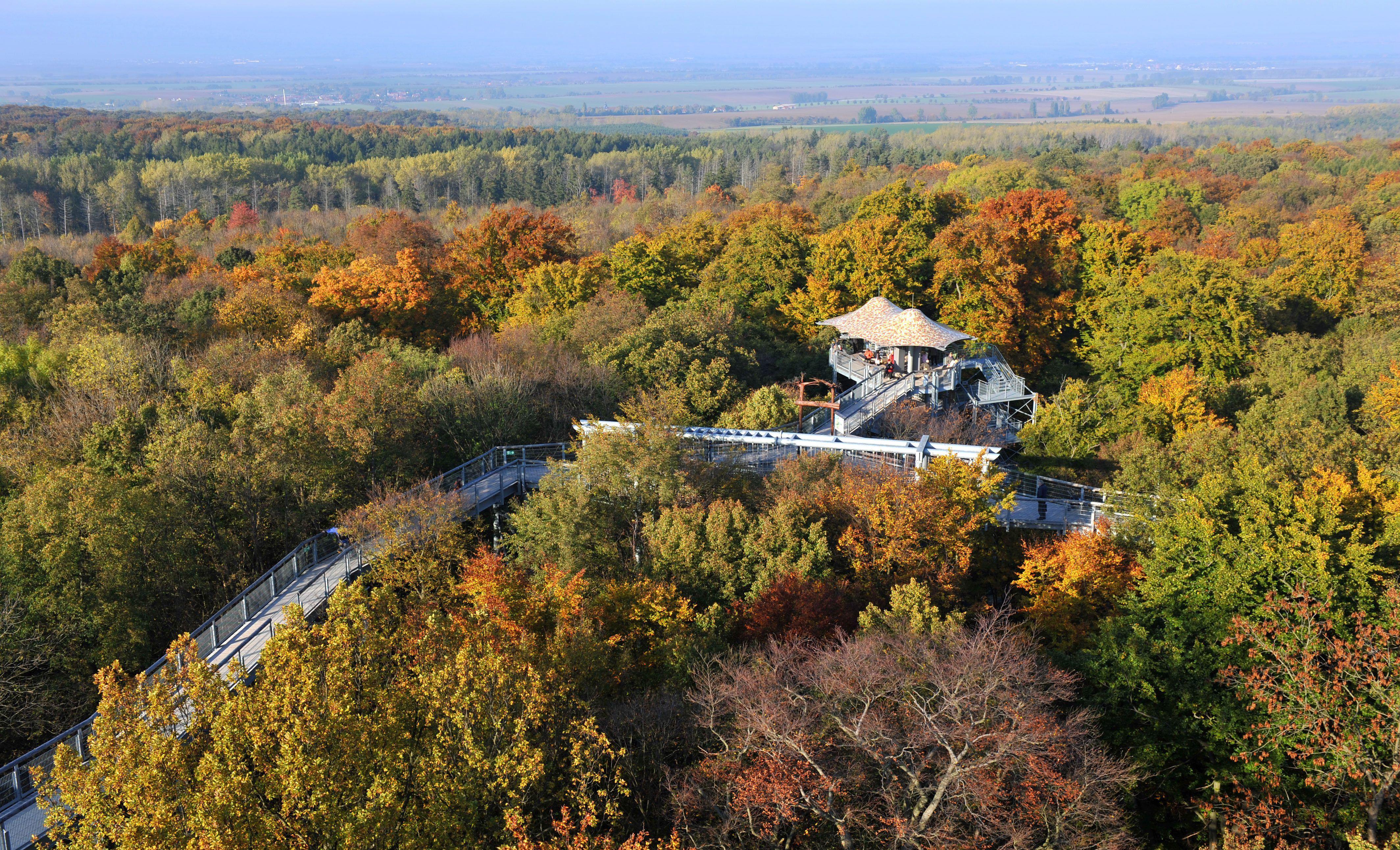 Der Baumkronenpfad Bietet Einen Blick Auf Den Herbstlich Gefärbten  Nationalpark Hainich. Foto: Alexander Volkmann
