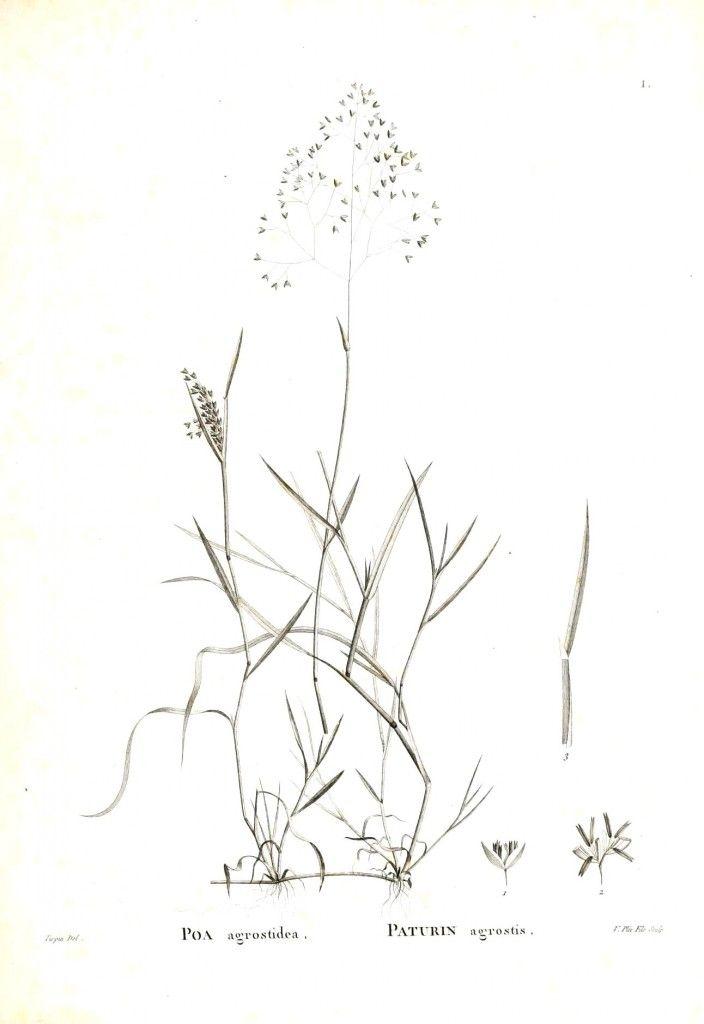 Botanical - Black and white, ground cover 1