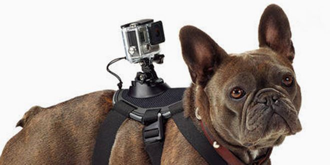 Capture Your Canine S Exploits With The New Gopro Dog Mount Dog