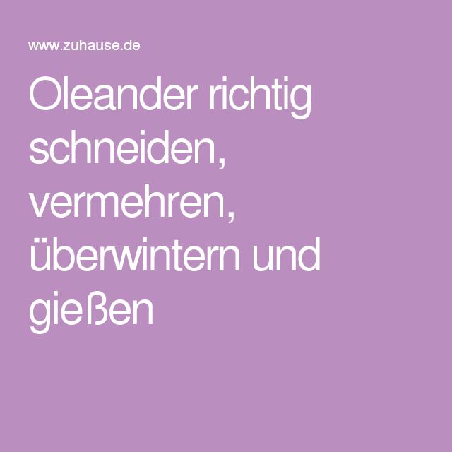 Oleander Richtig Schneiden, Vermehren, überwintern Und Gießen ... Oleander Als Zimmerpflanze Richtig Pflegen